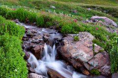 American Basin Wildflowers