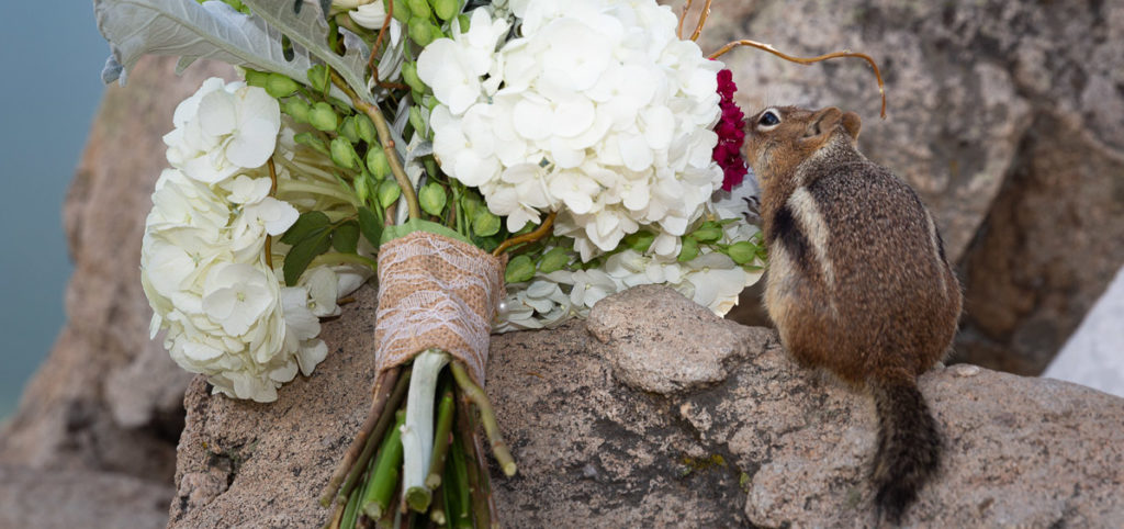 Chipmunk and wedding flowers
